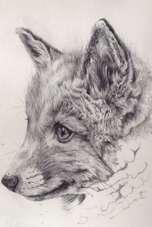 11 Easy Sketches to Draw with a Pencil for Beginners for 2020