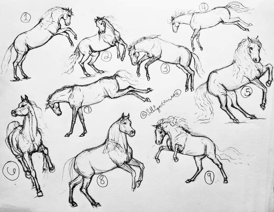 Horse Drawings Step by Step Easy for Beginners