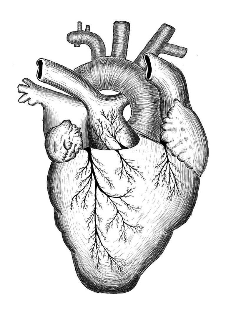 10 Realistic Heart Drawings and Tattoos - Simple Human ...