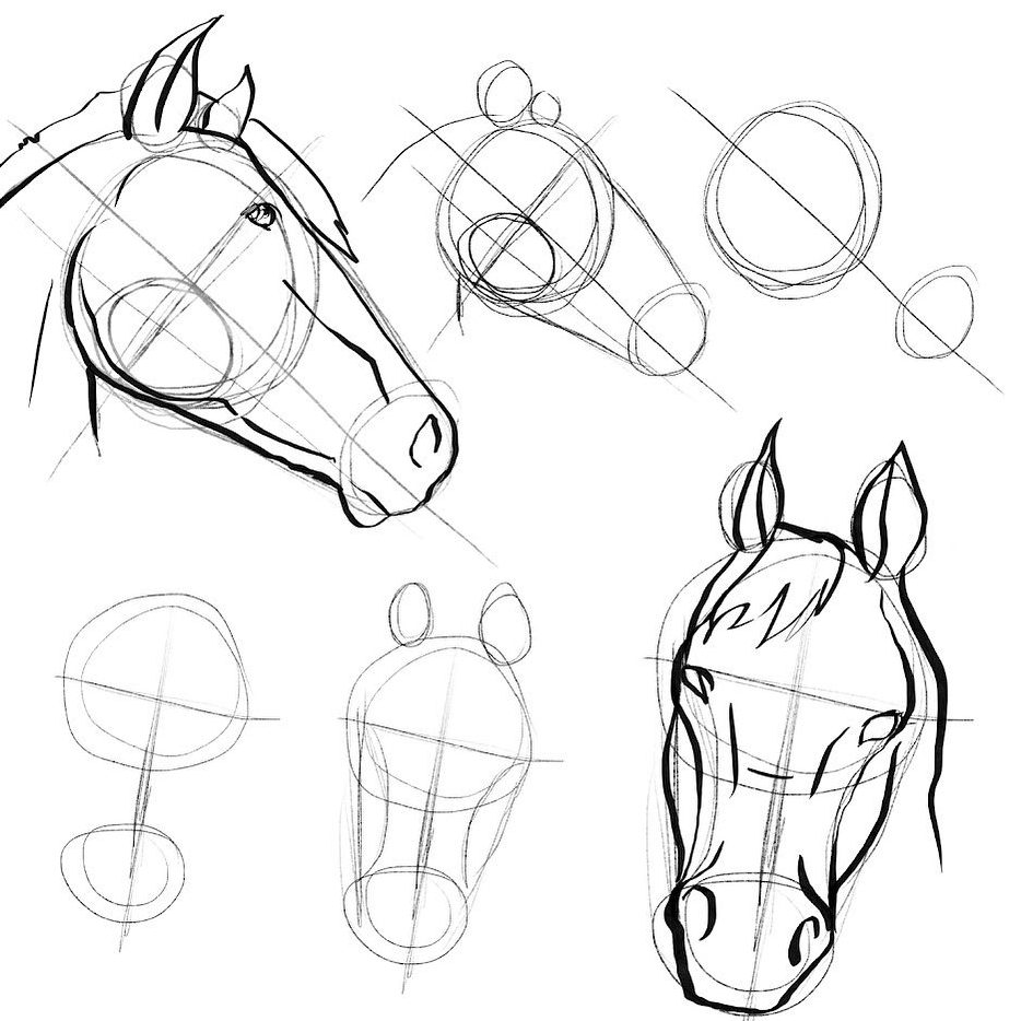 how to draw a horse head with a pencil