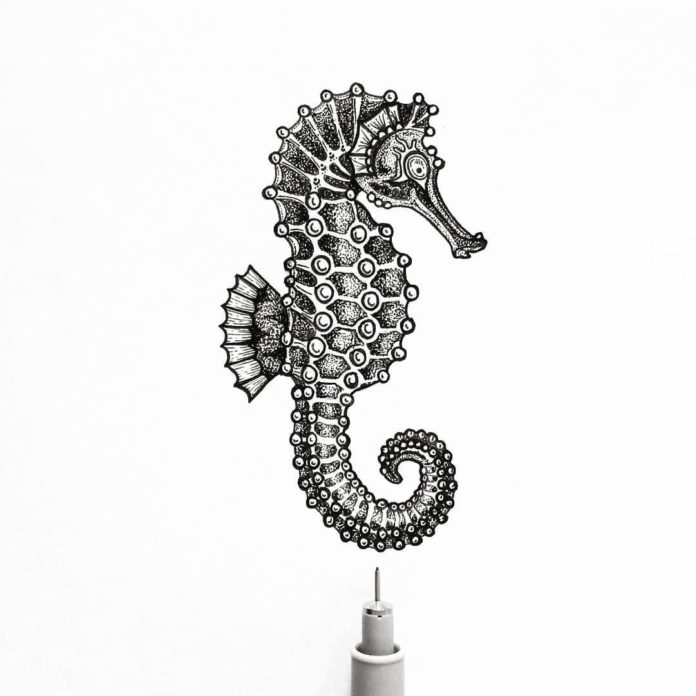 seahorse drawing outline 2020