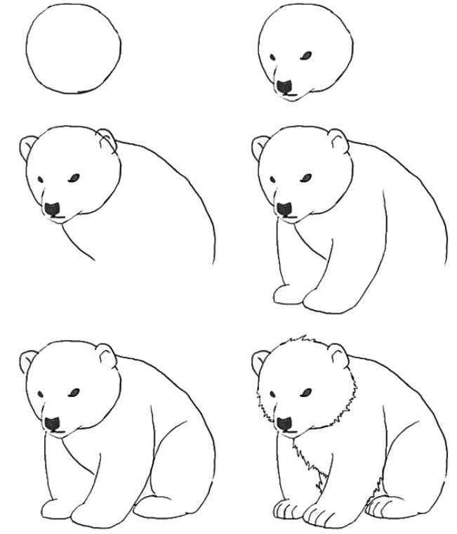Bear drawing easy step by step