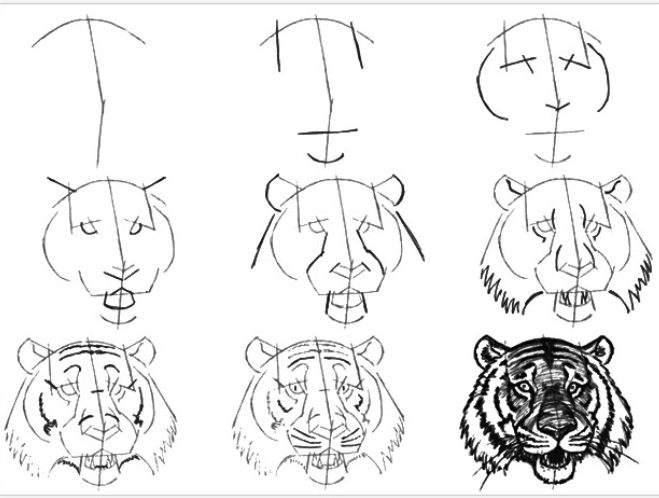 Easy tiger face drawing for kids step by step