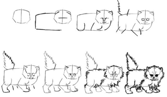 Fluffy cat drawing step by step