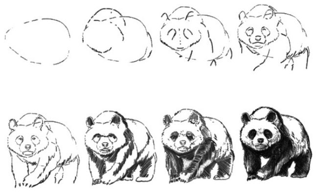 Realistic panda drawing step by step