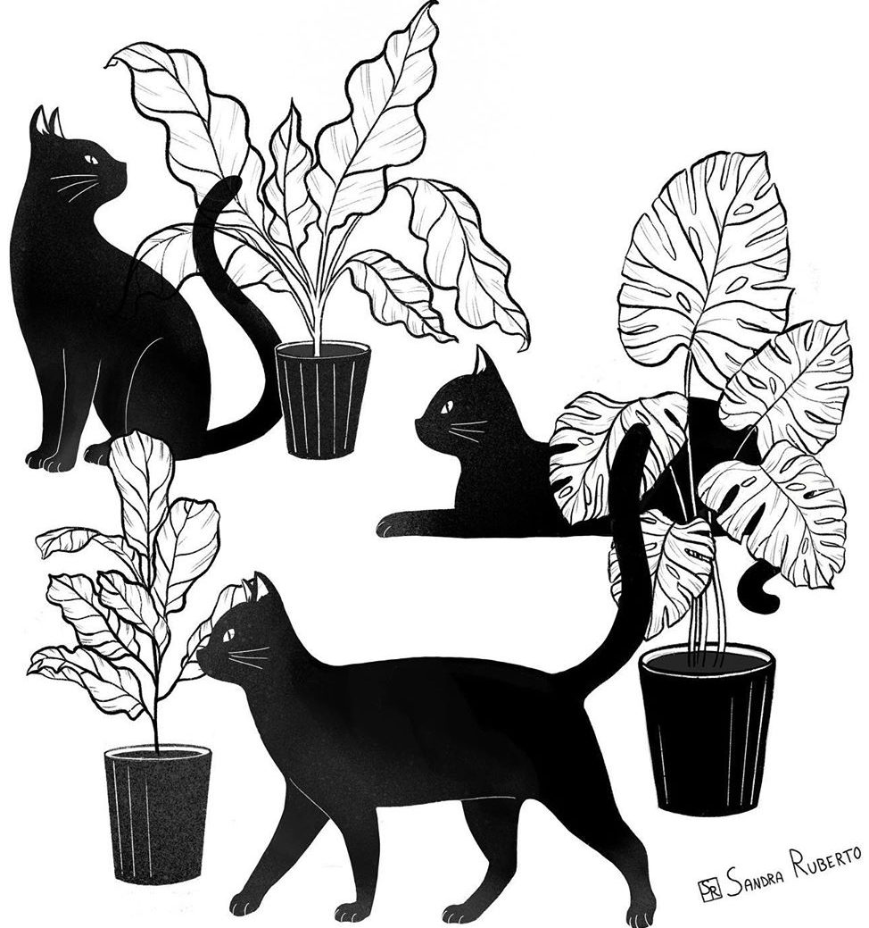 black cat illustration with plants