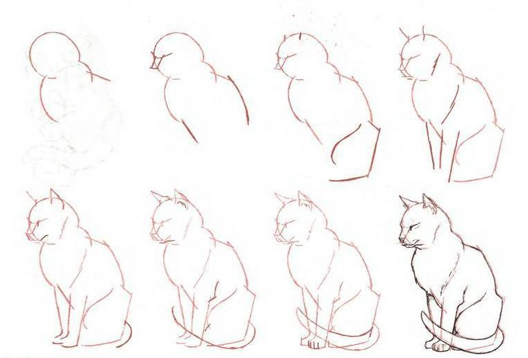 Cat figure sketch
