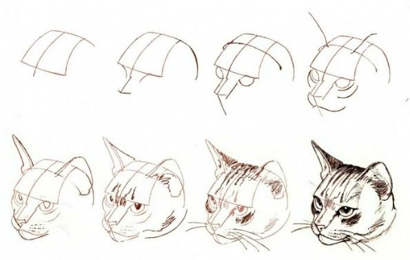 Cat head drawing step by step