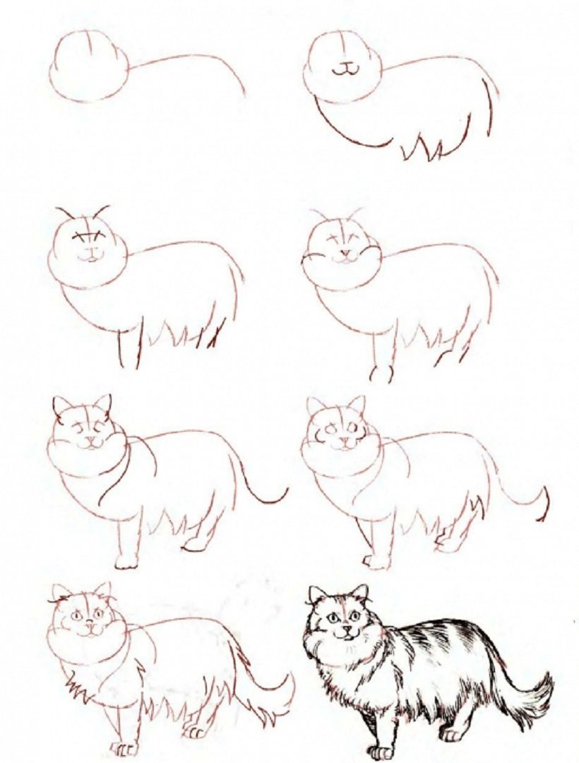 Easy step by step beginner cat drawing