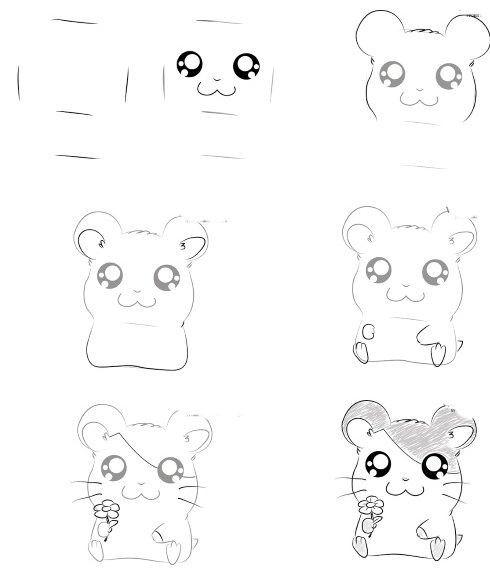 Hamster drawing step by step