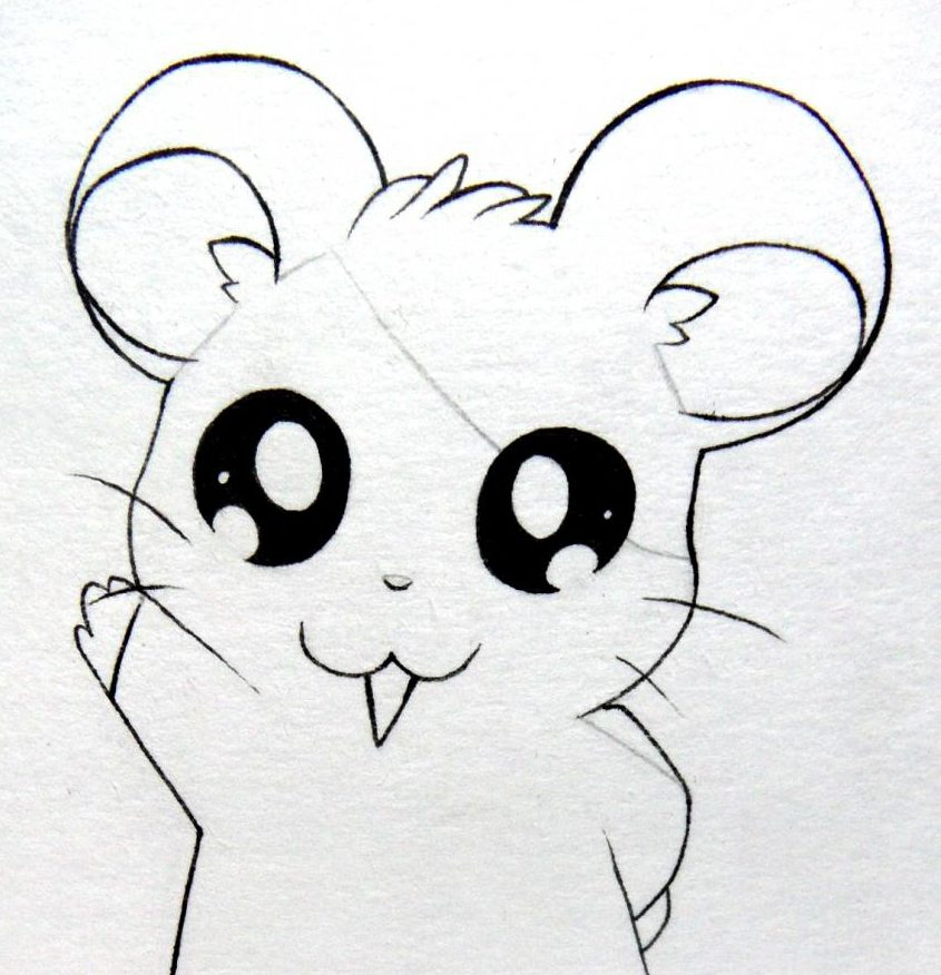 Kawaii cute hamster drawing