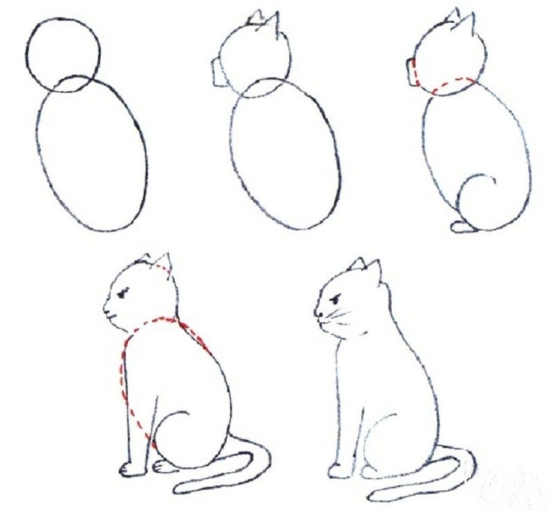 Easy beginner cat drawing
