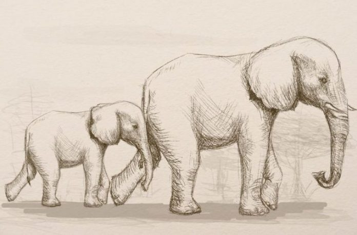 realistic elephant and baby drawing