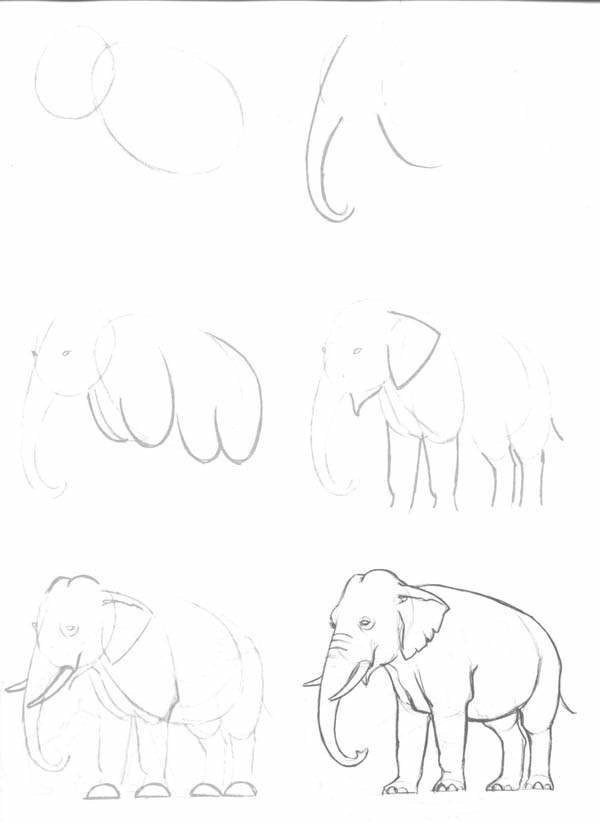 sketch how to draw an elephant