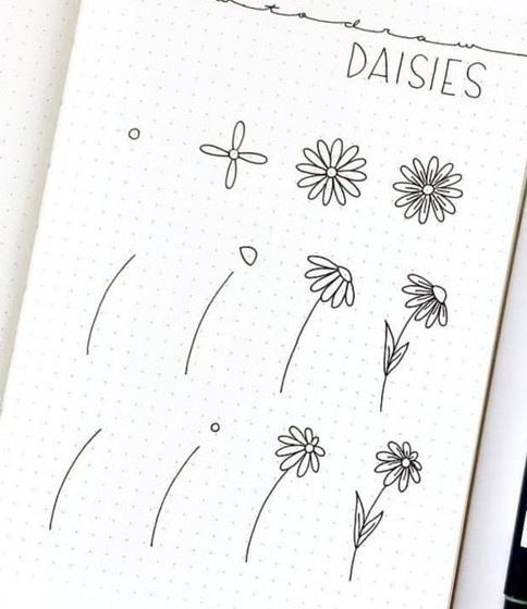 Daisy flower drawing