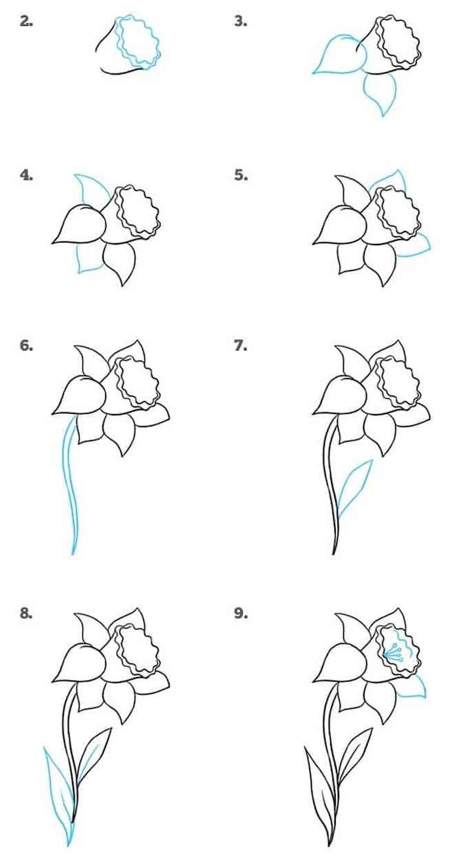 Flower drawing easy step by step