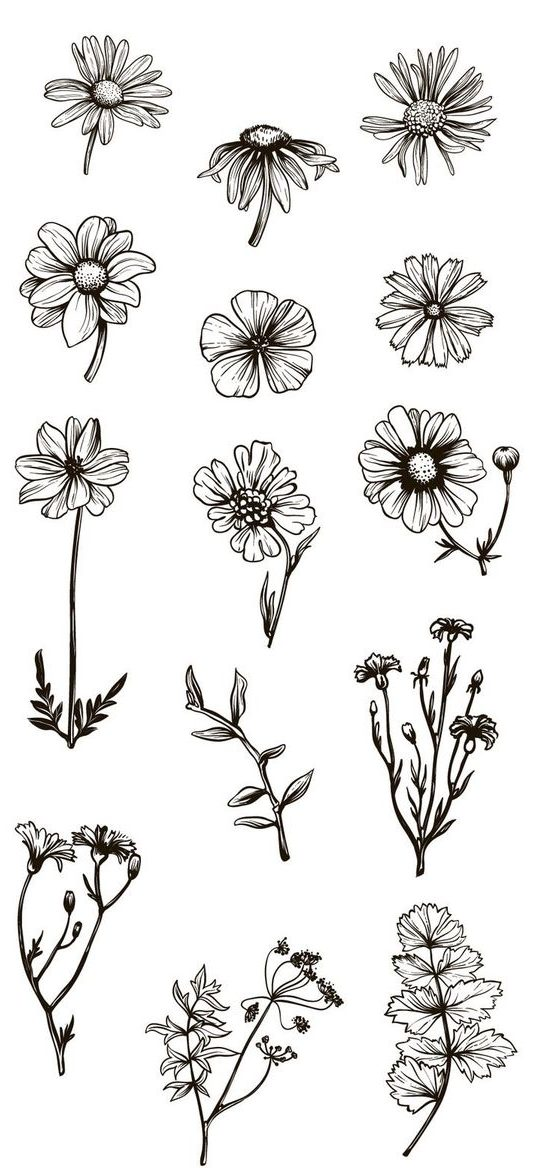 Flower drawing picture
