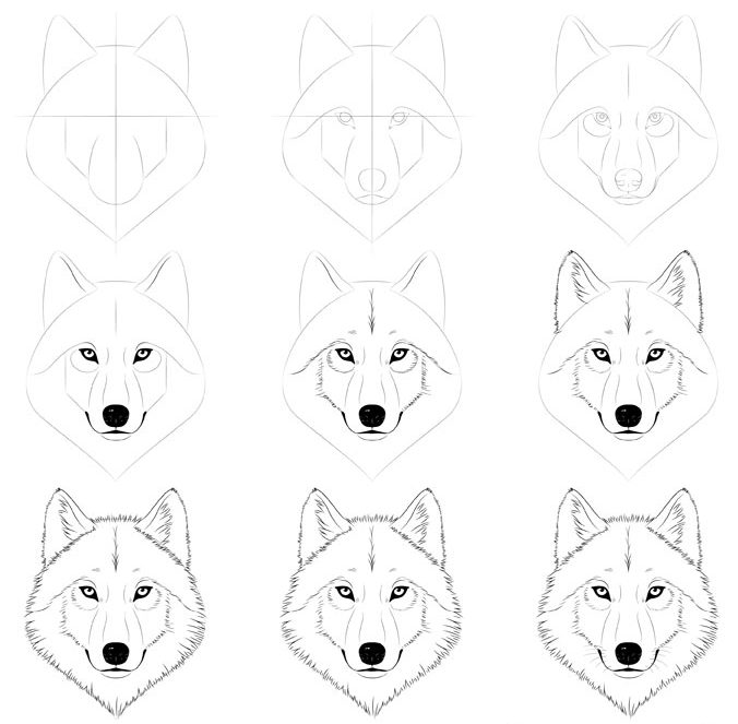 Step by step wolf face drawing easy