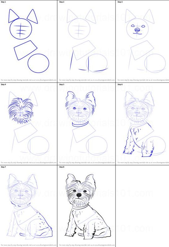 animal drawing dog step by easy