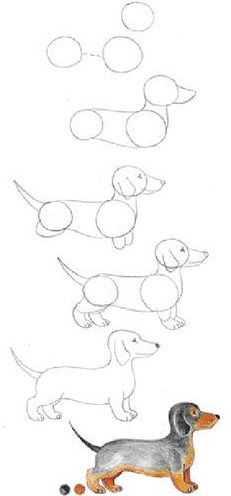 dachshund puppy sausage drawing dog step by easy