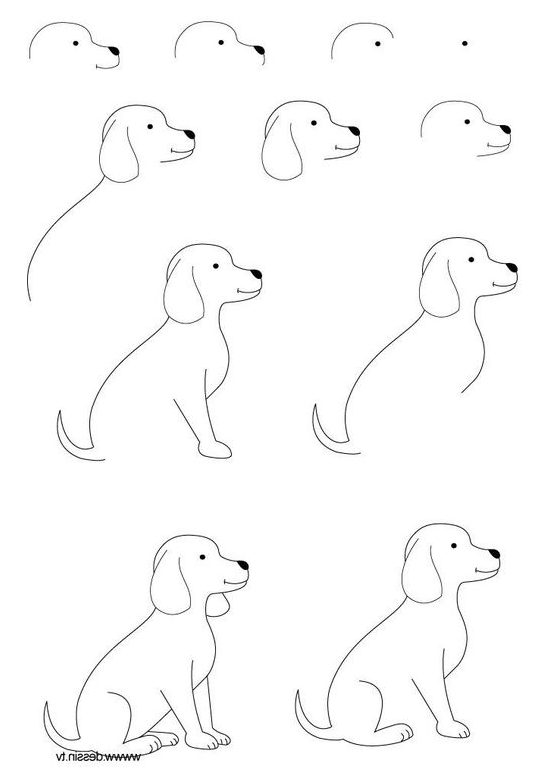 drawing dog step by easy