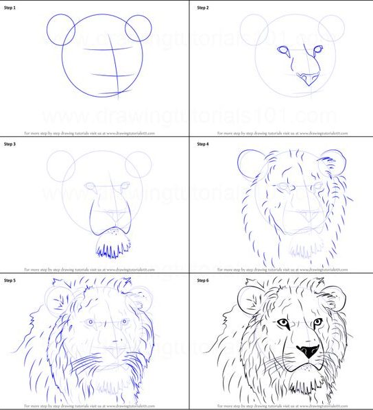 easy how to draw a lion step by step