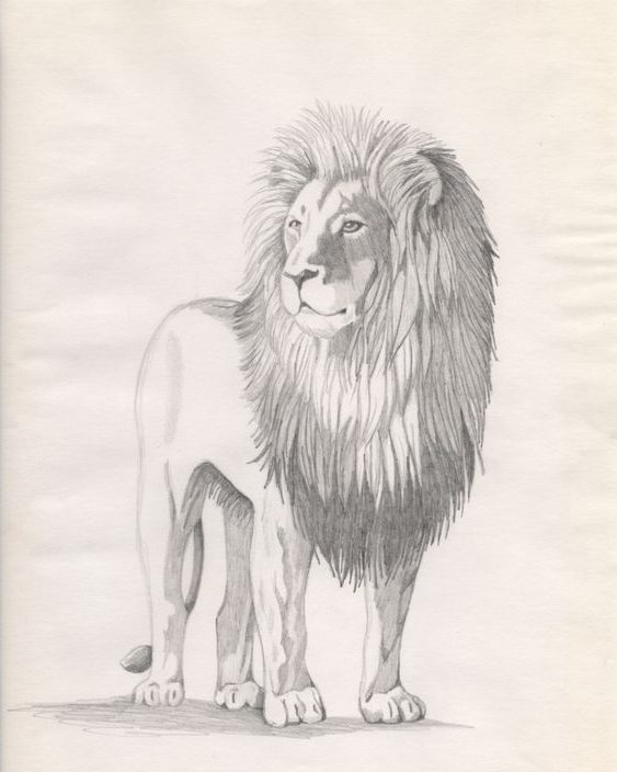 full body lion drawing
