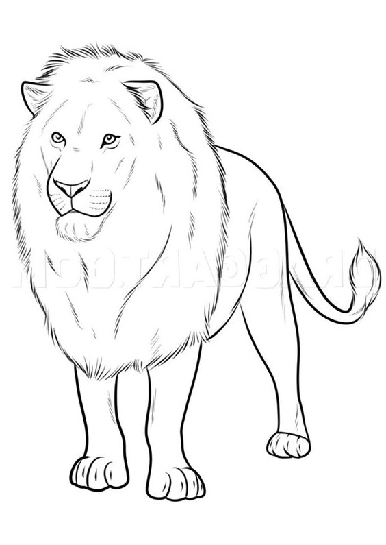 realistic easy lion drawing