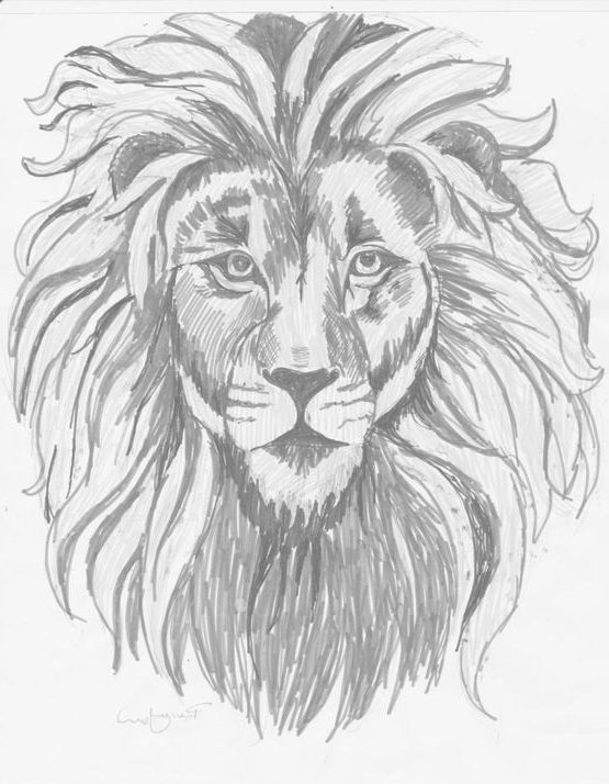 realistic easy realistic lion drawing