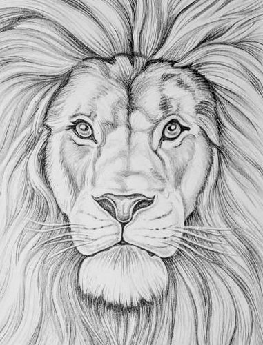 realistic lion face drawing
