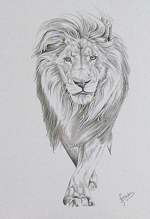 realistic realistic lion drawing