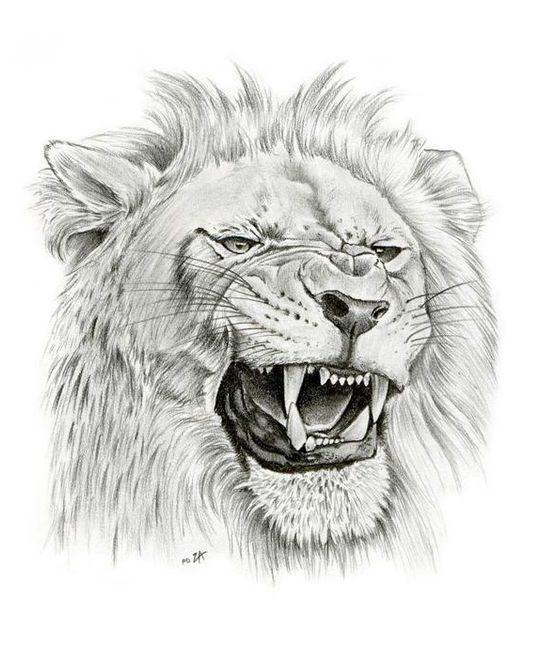 roaring lion drawing