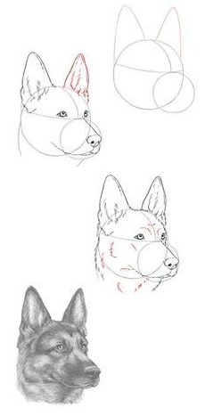 sketch dog drawing