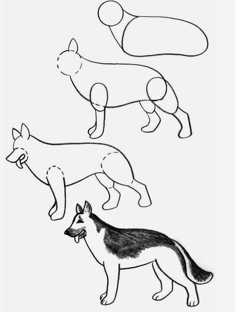 sketch drawing dog step by easy
