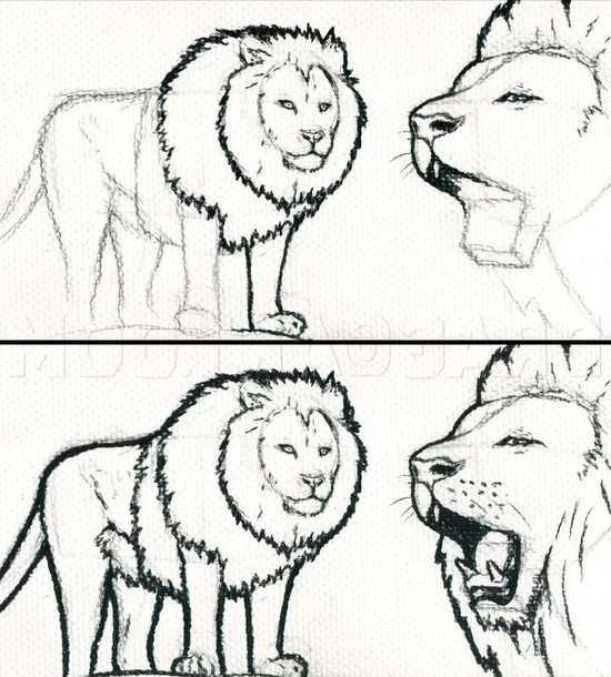 sketch how to draw a lion face