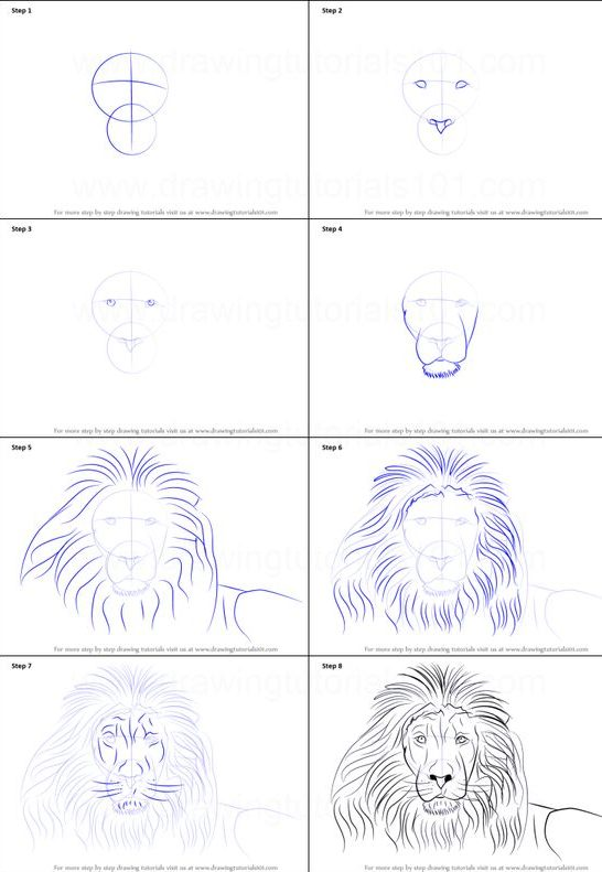step how to draw a lion face