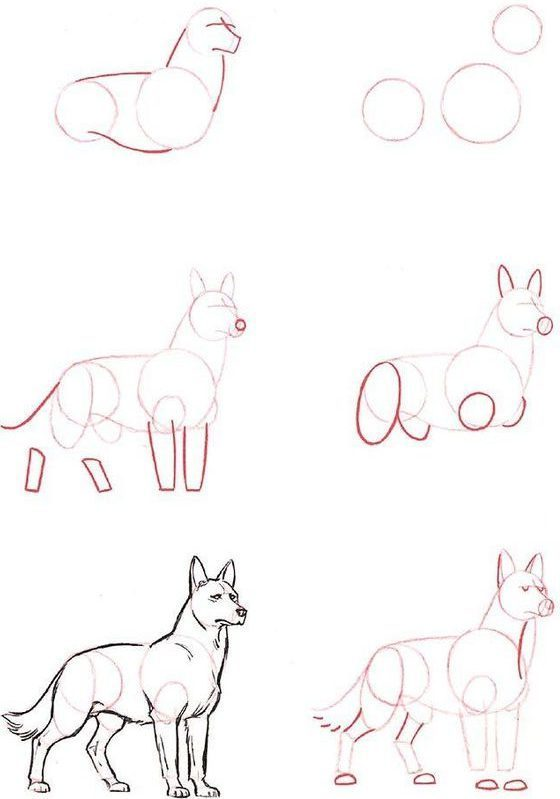 tutorial drawing dog step by easy