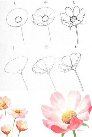Cosmos flower drawing easy step by step