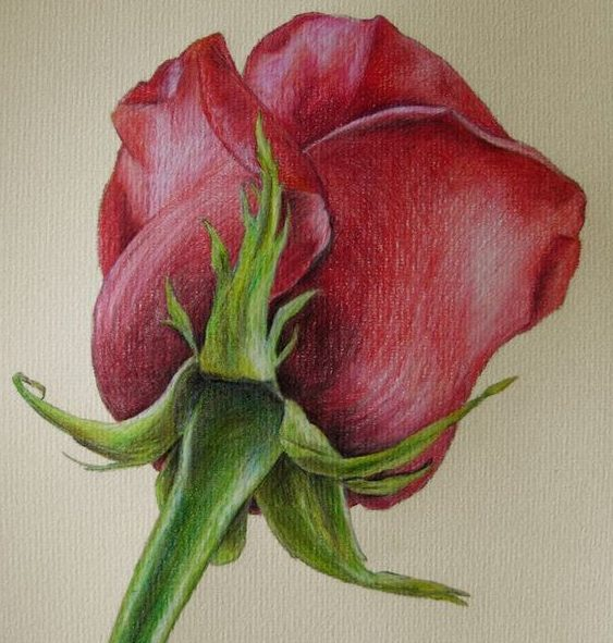 Flower drawing colour