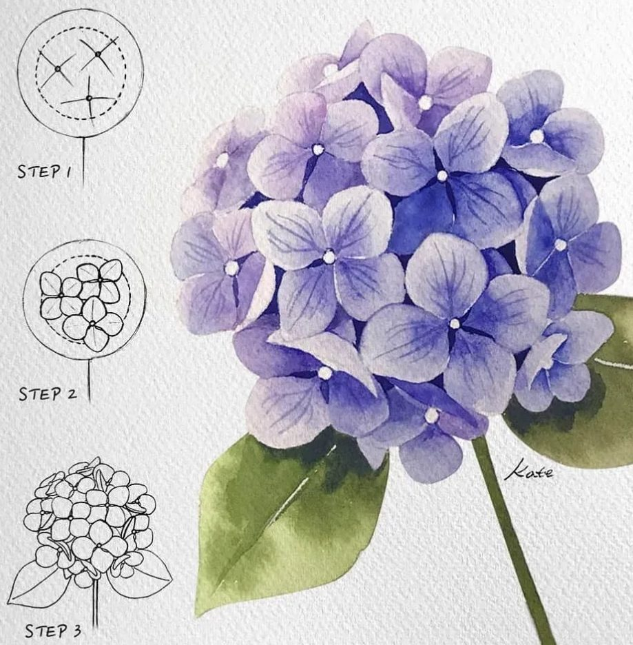 Flower drawing colour step by step