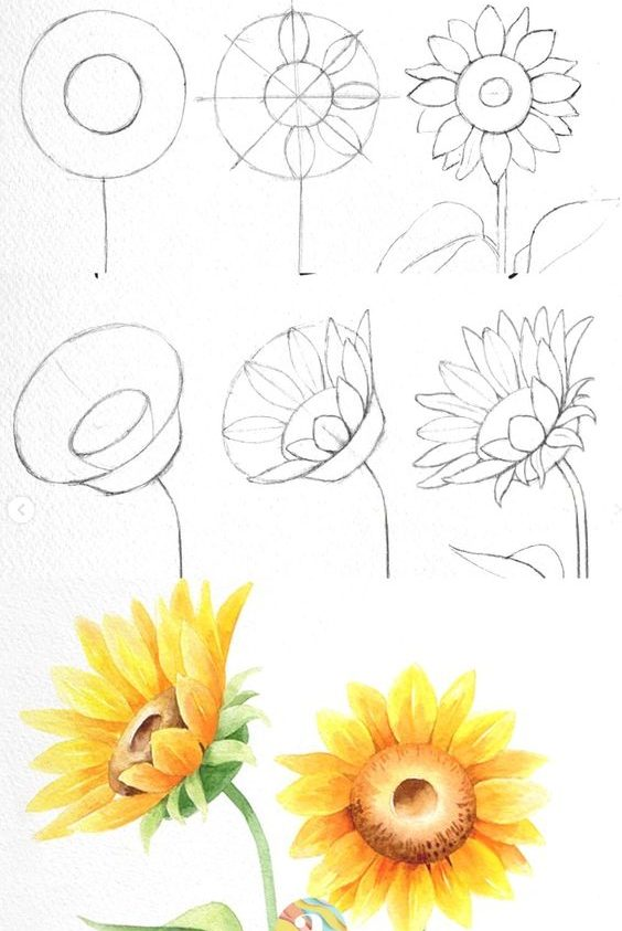 Flower drawing step by step